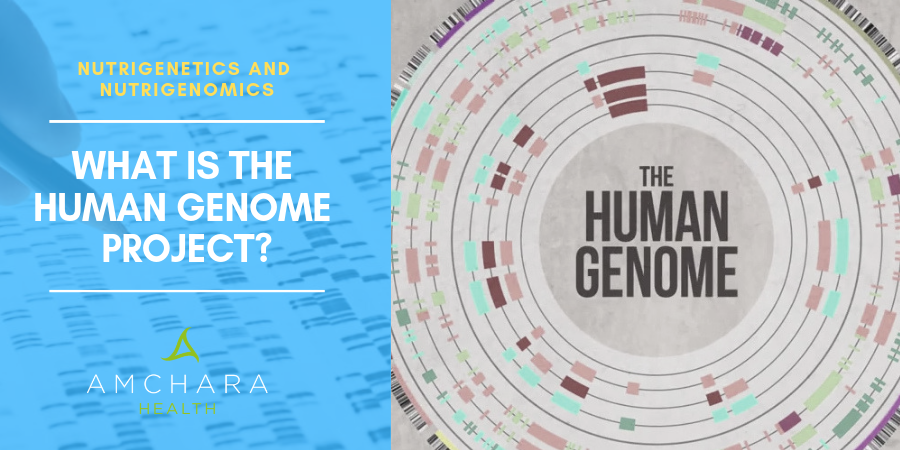 What is Human Genome Project?