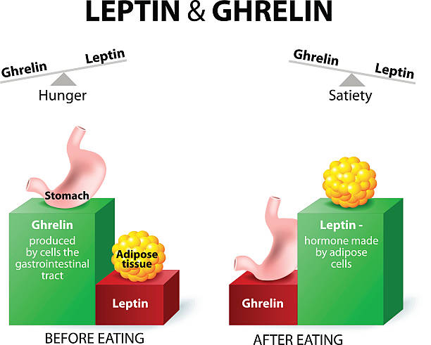 Ghrelin-after-eating