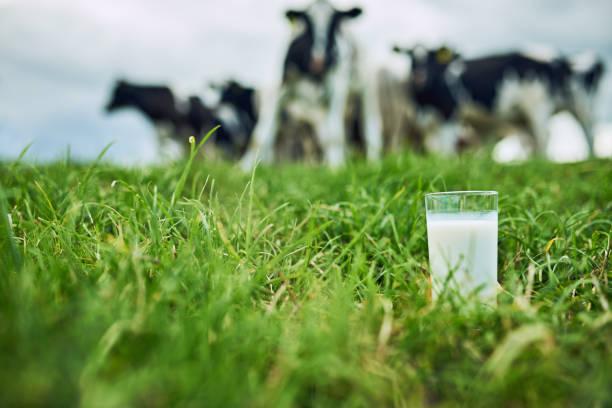 Milk-The-Dairy-Dilemma