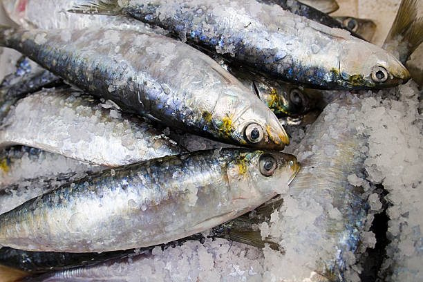 image-result-for-oily-fish-sardines
