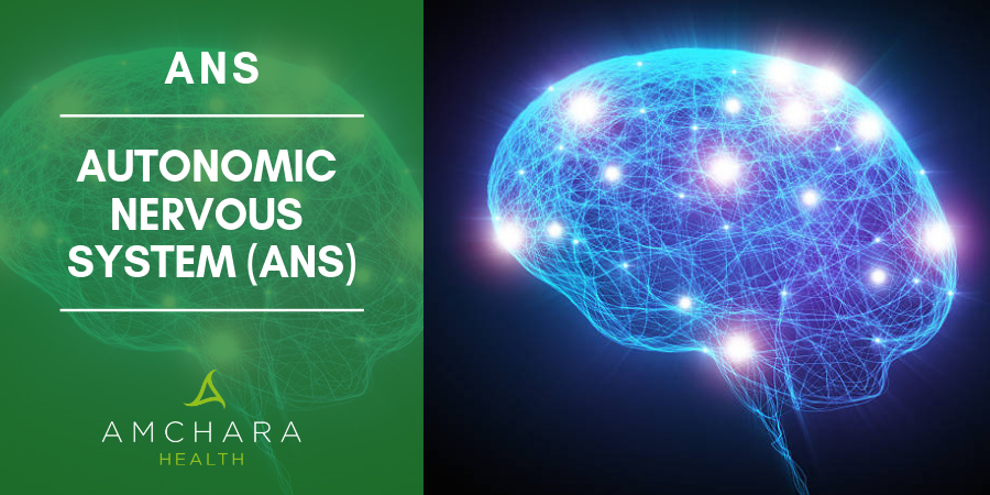 So what is the Autonomic Nervous System (ANS)?