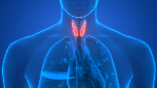 Low thyroid increases risk of diabetes, study shows