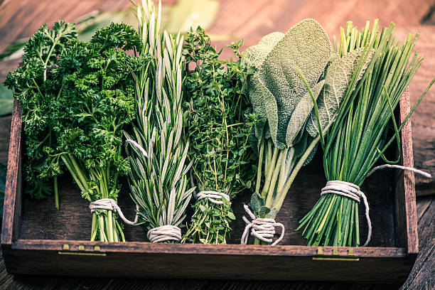 Five of the Best Hormone Balancing Herbs
