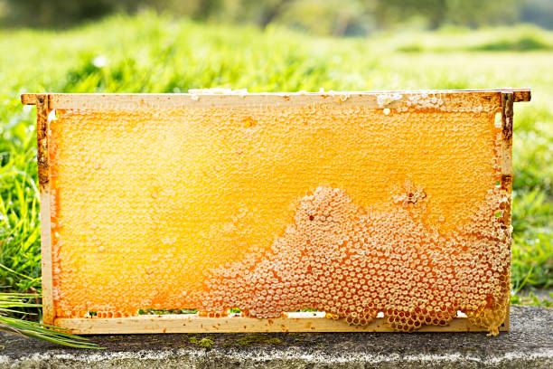 Super Foods - Raw Honey