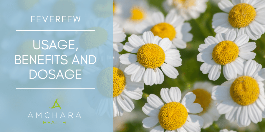 Feverfew – A favourite for migraine relief
