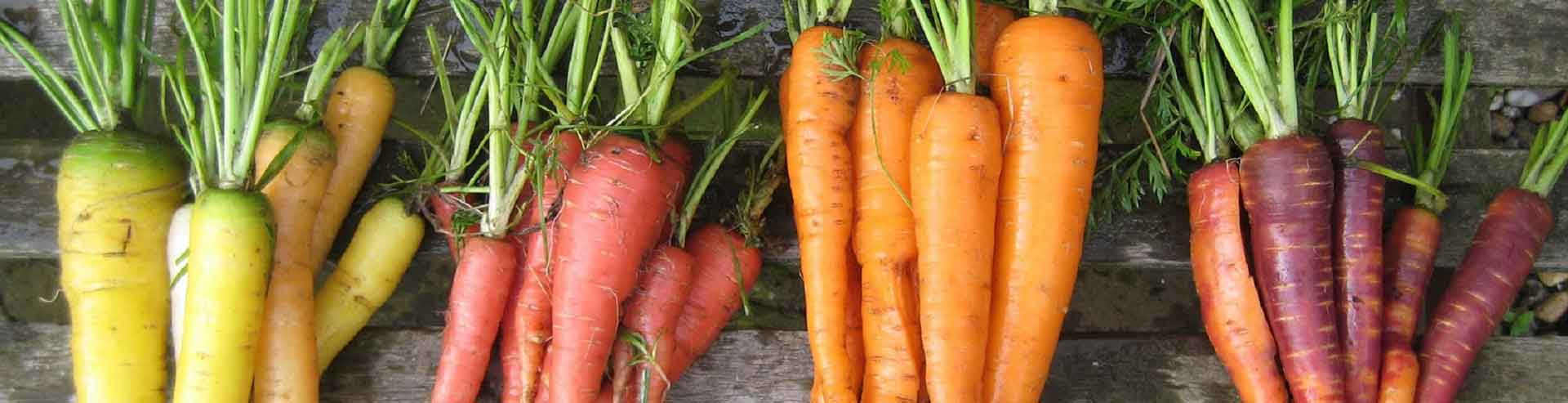 Coloured Carrots and the Health Benefits