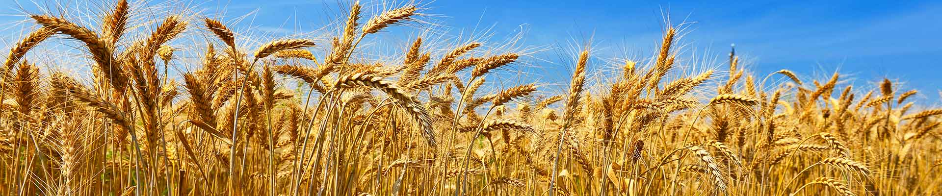 7 Reasons to choose a wheat-free diet