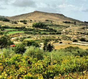 green-hills-gozo