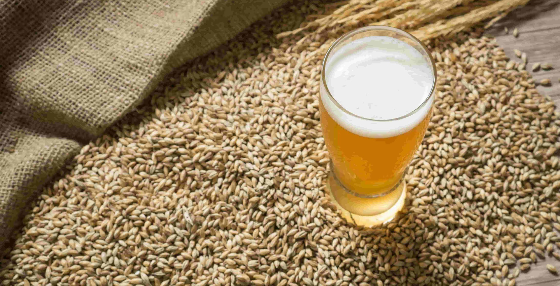 Probiotic Beer – a novel fermented food of the future?