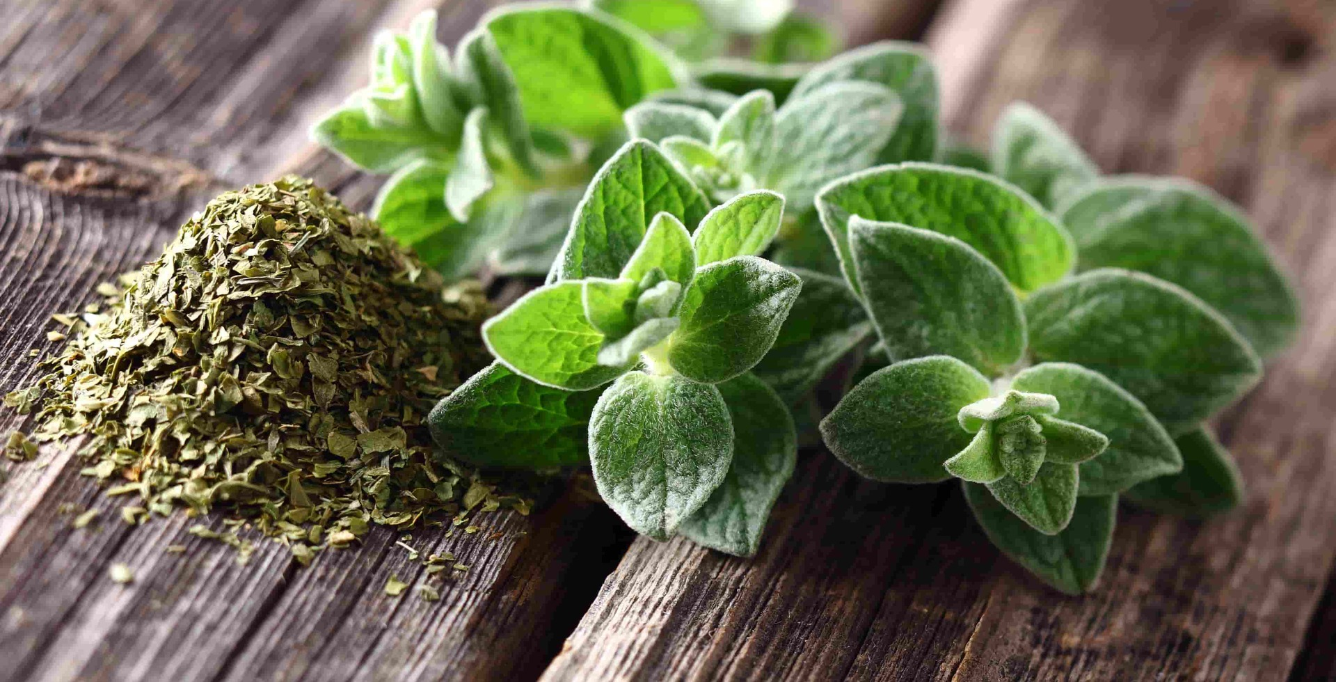Oregano – keeping the bugs at bay