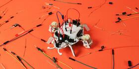 beetlebot project