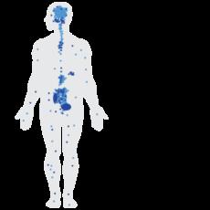cb-receptors-body