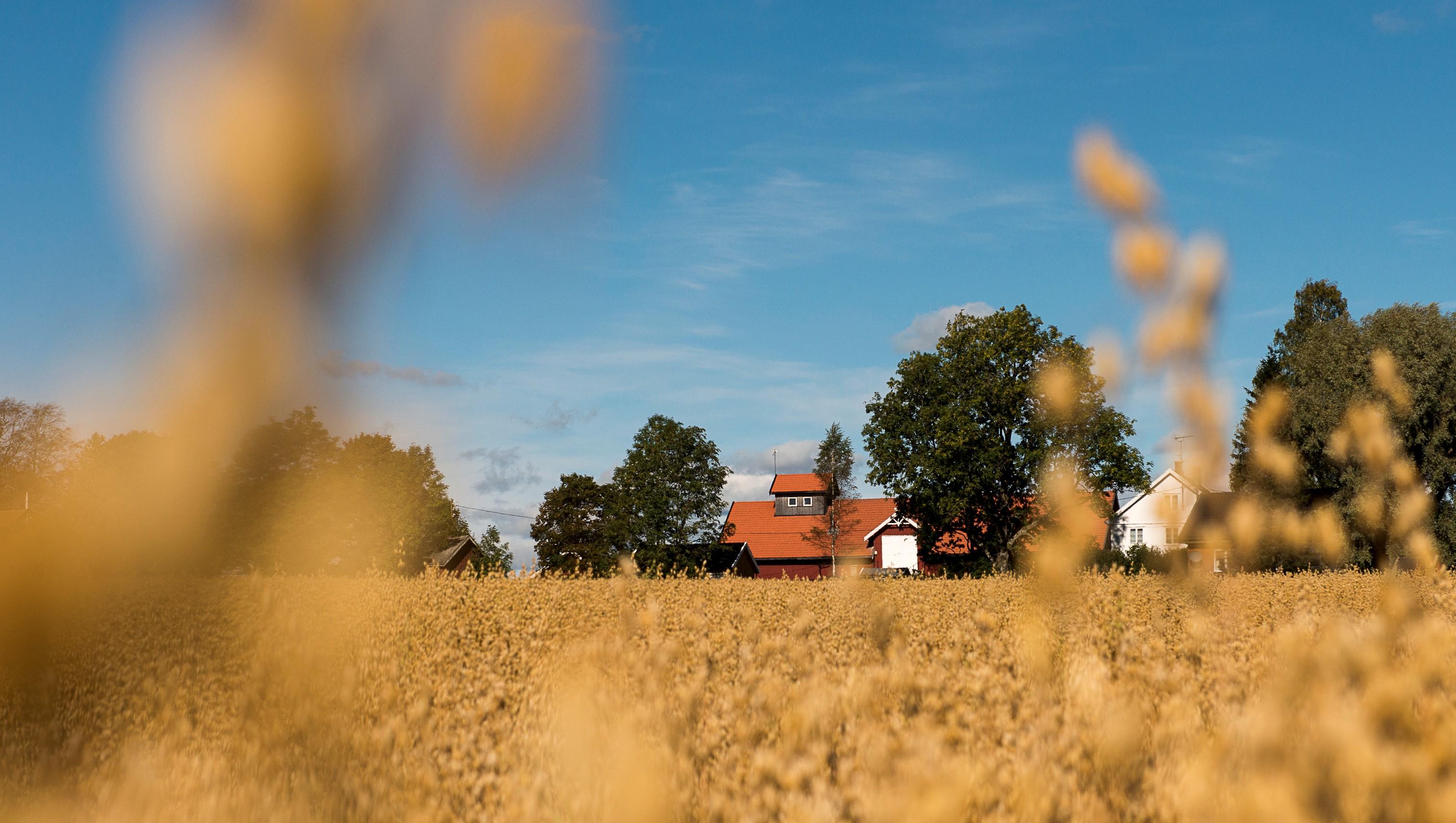 Anbud365: Mulighet for lokal mat - krev økologisk eller del opp kontrakter