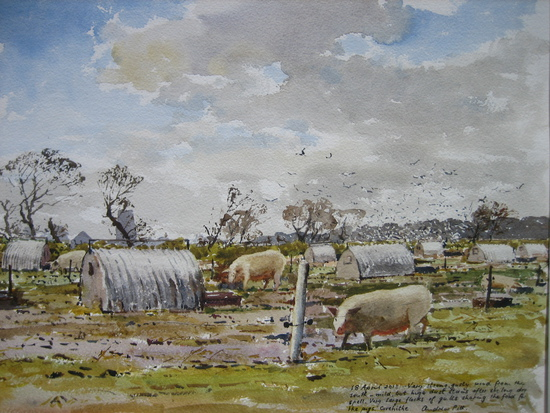 Pigs at Covehithe