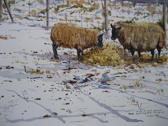 Sheep in the Snow - Easton Bavents