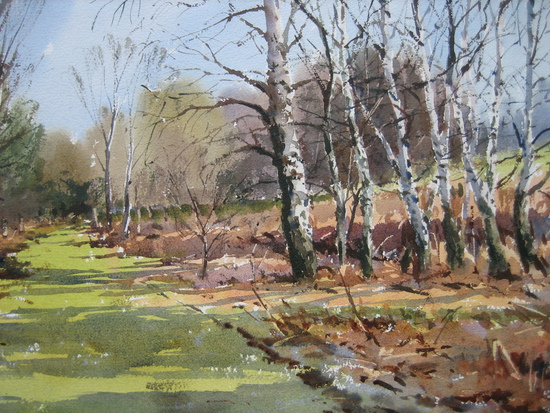 Spring Sunlight - Walberswick Nature Reserve