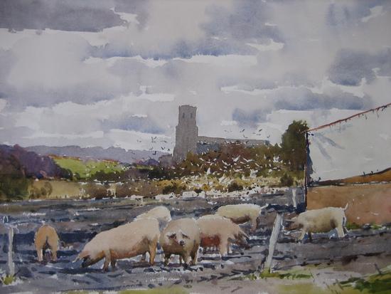 Pigs and Gulls at Blythburgh
