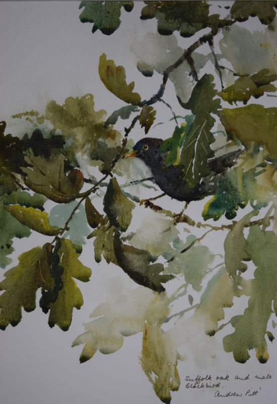 Suffolk Oak and Male Blackbird