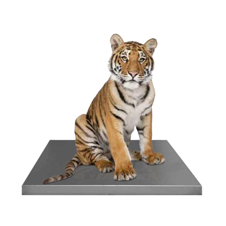 Avante Zoological Platform Scales: Multiple Models