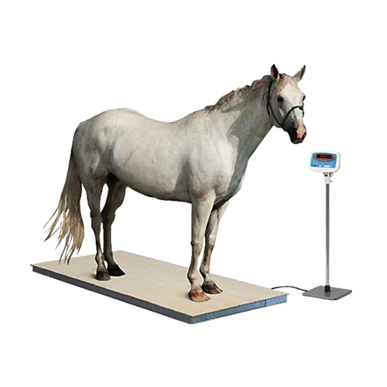 Equine Digital Floor Scale