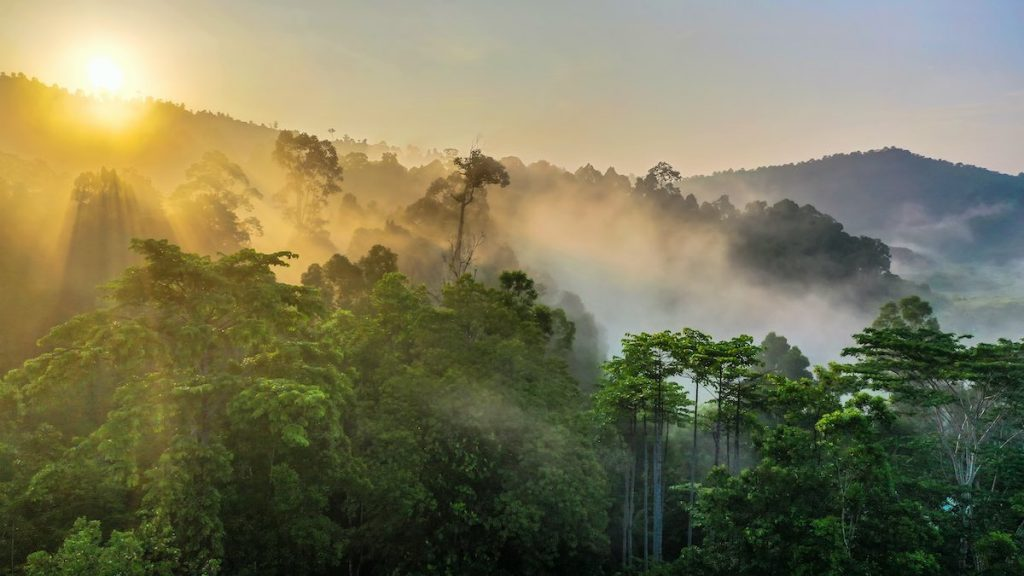 Shot of Borneo rainforest protected under tree planting initiative