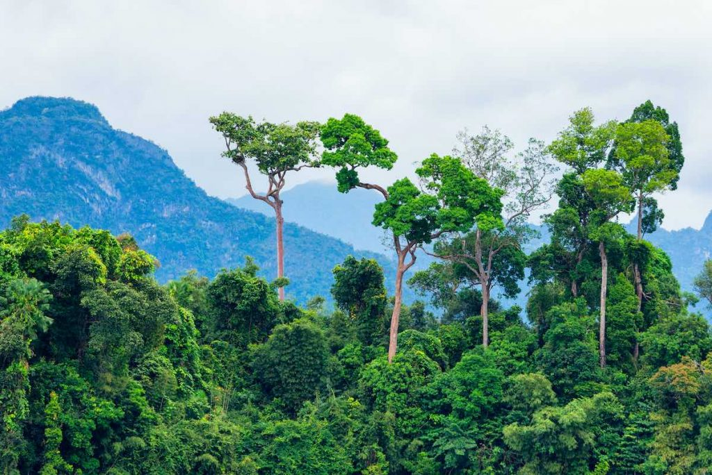 Rainforest protected by tree planting initiative