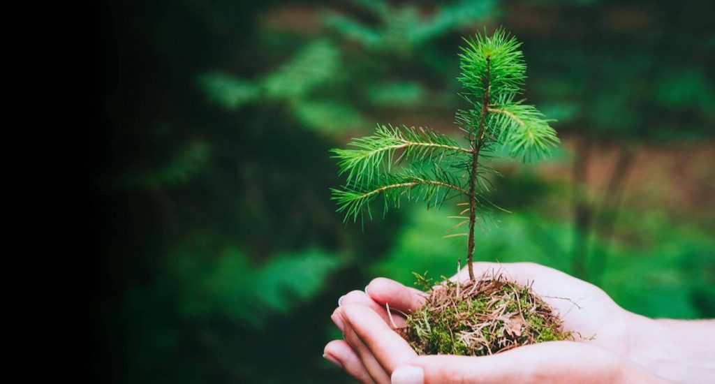 Hands planting tree sapling as tree planting initiative