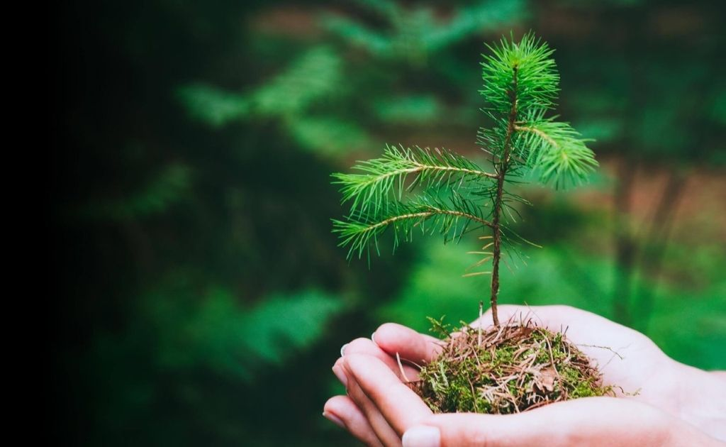 Tree being planted as part of the 1 Tree 1 Planet initiative