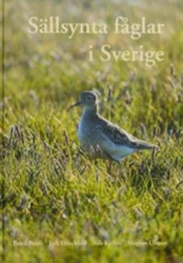kuva: Sällsynta fåglar i Sverige