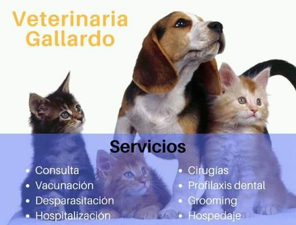 Clínica Veterinaria Gallardo