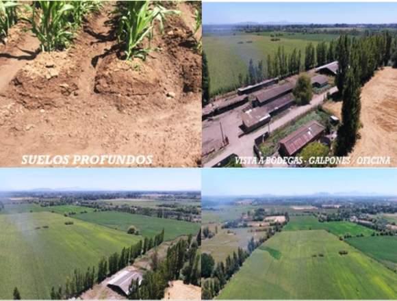 Vendo Campo 80 hectareas