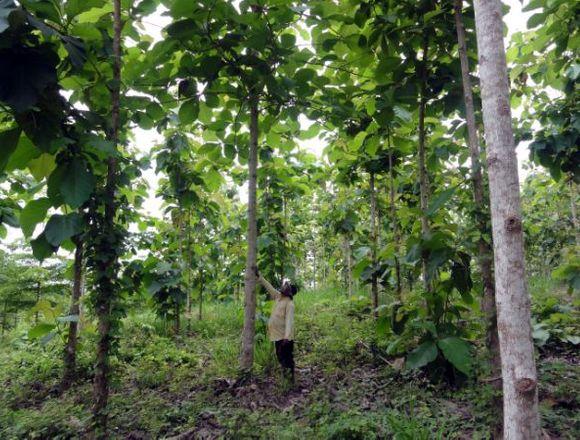 2 ha de terreno  con teca en Darien, Panamá