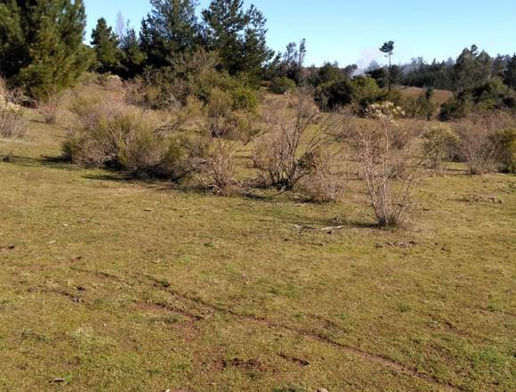 Vendo parcela rural de 5.000 m2 Nacimiento bio bio