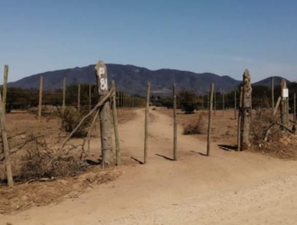 4,4 hectáreas en catapilco