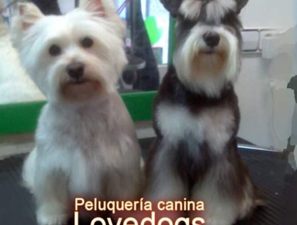 PELUQUERIA CANINA LOVEDOGS