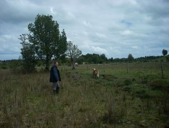 Vendo terreno en sector Cariquilda Maullin