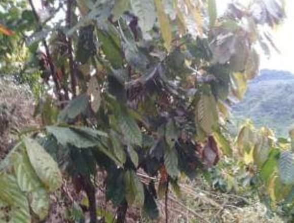 Se vende terreno agrícola en Tingo Maria