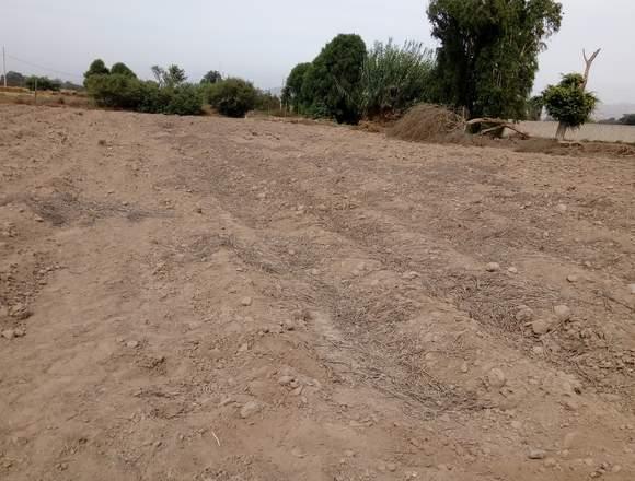 Remato terreno en pachacamac 1000 mts2