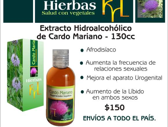Cardo mariano, regenerador hepático natural