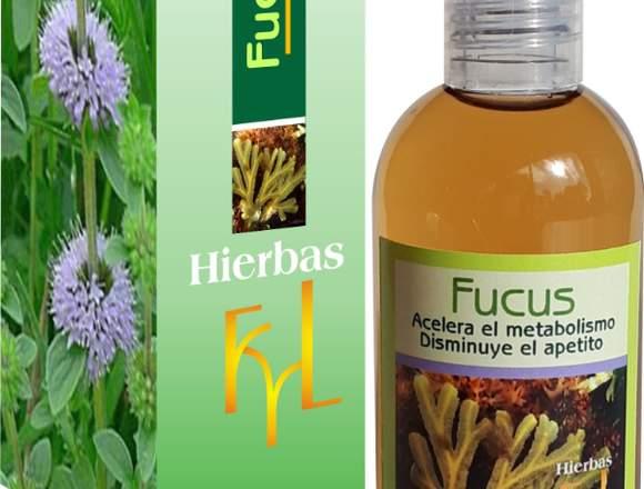 fucus,acelera el metabolismo, disminuye el apetito