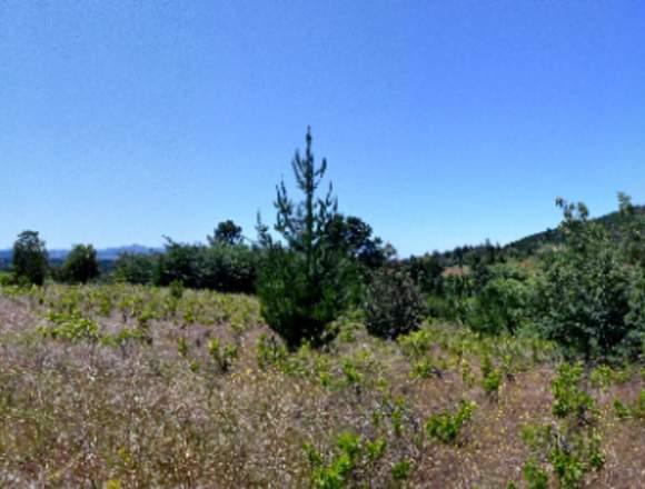 Terreno 1.22 hectáreas en nueva región de Ñuble