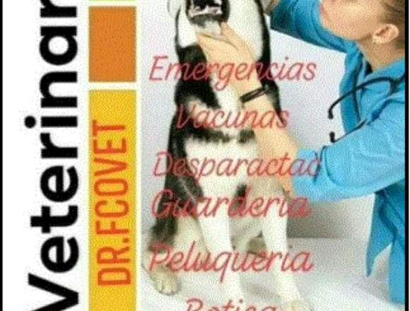 veterinaria 24 horas en Guayaquil Pet  0999575368