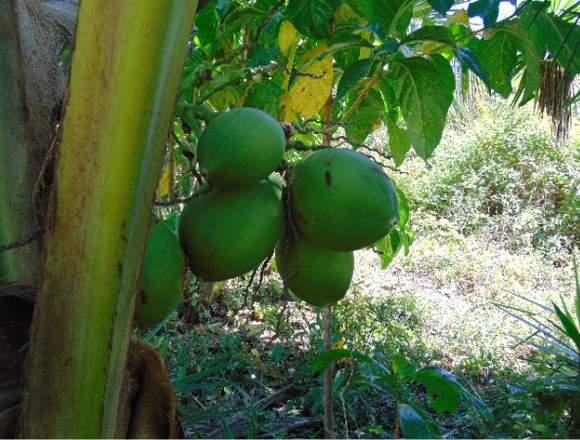 Venta de 2 fincas en Niquinohomo-Nicaragua.