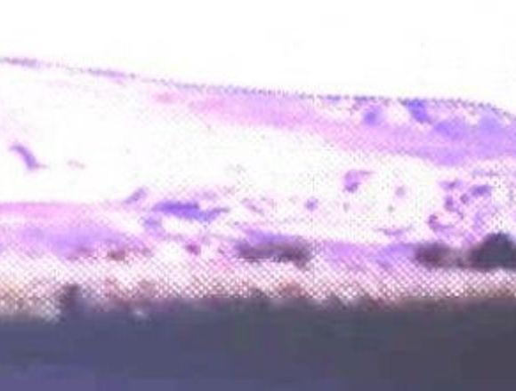 Vendo Chacra 13 hectares en zona Dolavon, Chubut