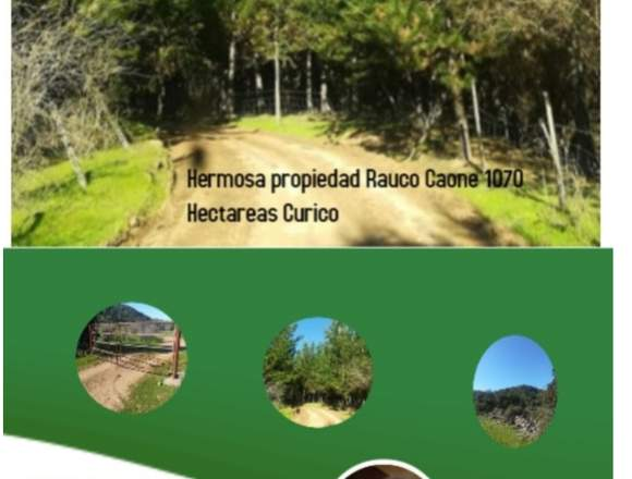 Terreno ubicado en Rauco Caone Curico 1070 Hecta