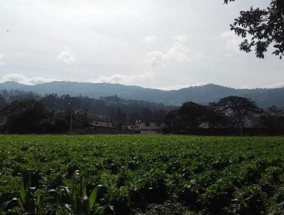 Venta Terreno – Yaruqui – UNICO -  4135 m2
