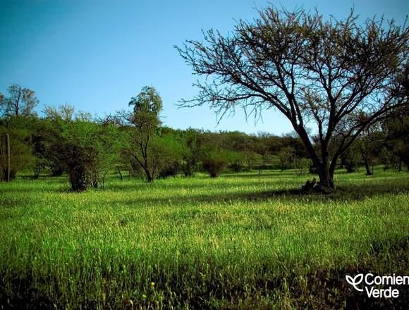 Parcelas Sustentables Comienzo Verde Limache