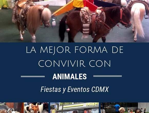 Fiesta Granja,Fiesta Spa unicornio