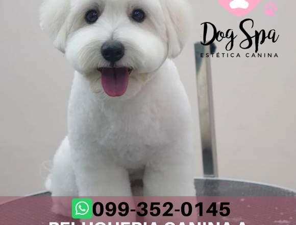 Servicio de peluquería canina a domicilio