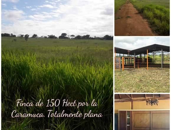 FINCA DE 150 HECTÁREAS CARAMUCA BARINAS